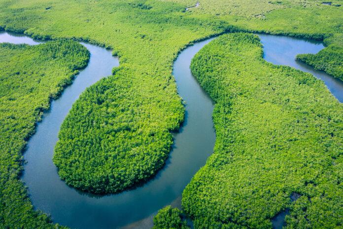 Vista aérea da floresta amazônica no Brasil